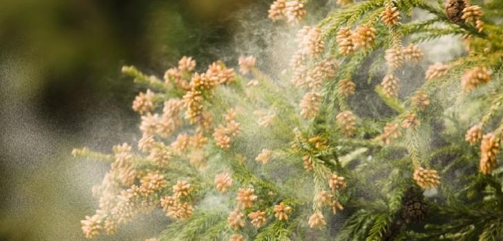 花粉症カラコン